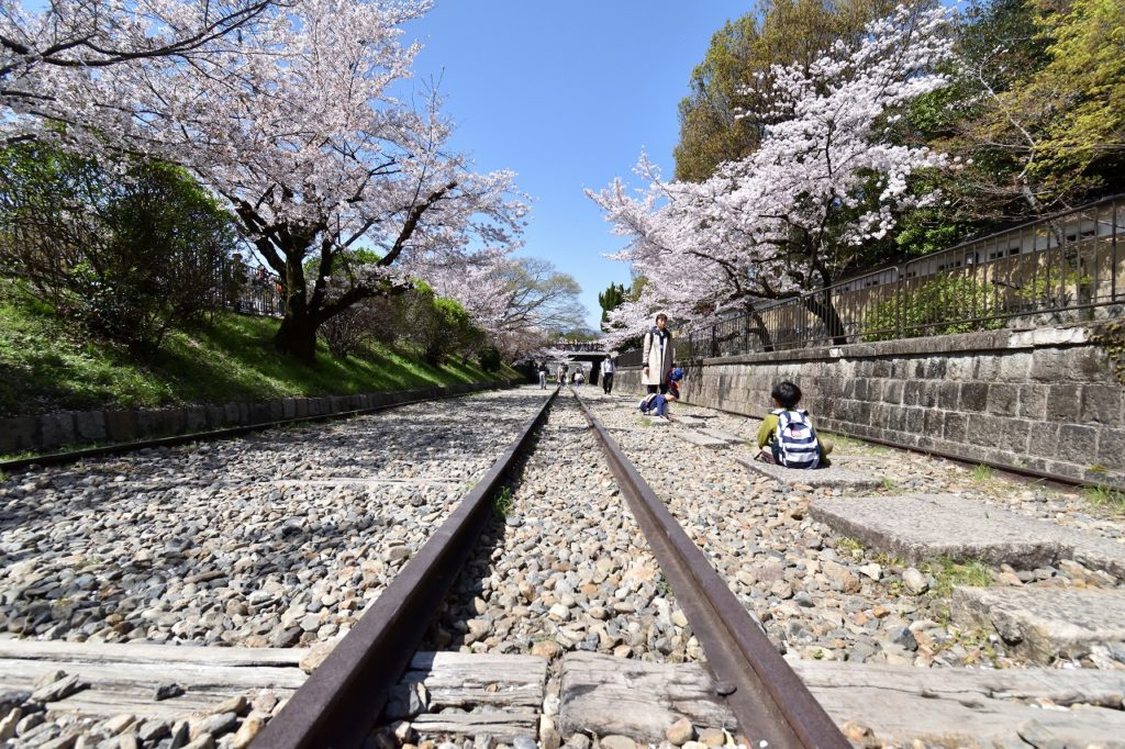 京都 桜 名所