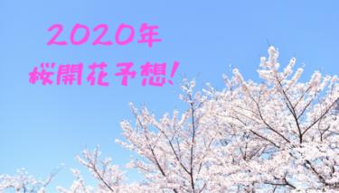 【2020年】桜開花予想!今年は例年通りの開花となりそうです!