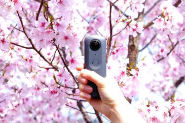 大阪の桜の名所「狭山池公園」!街に溶け込む素敵なスポット!