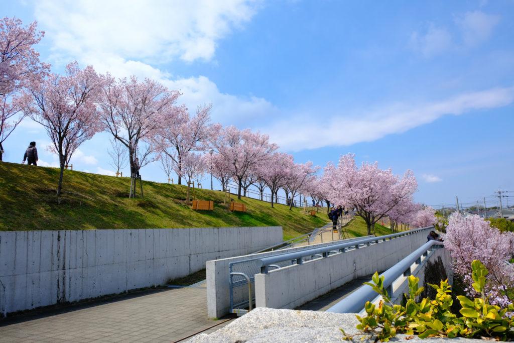2020年 桜 大阪