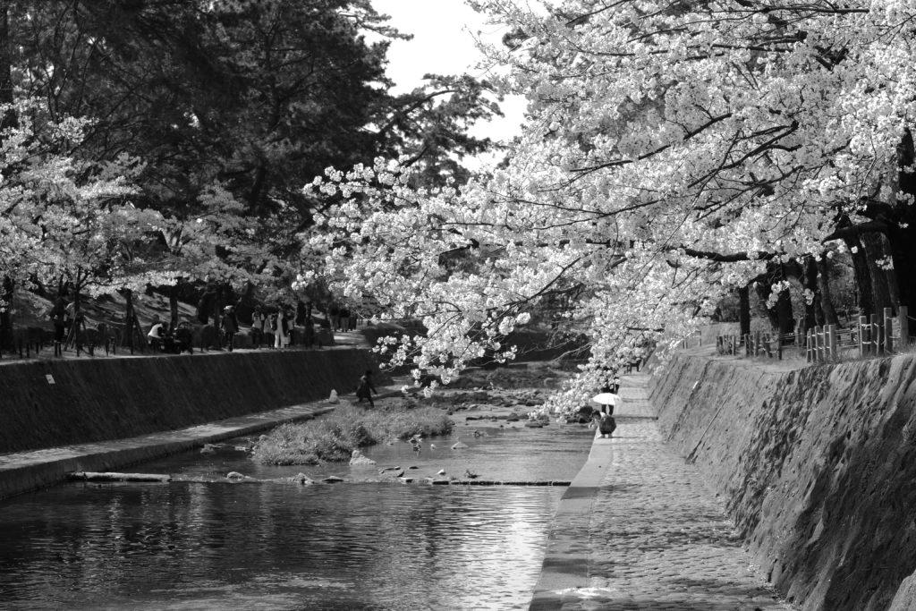 夙川スナップ写真
