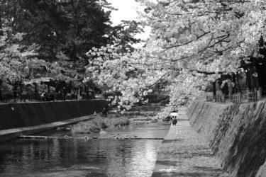 『夙川河川敷緑地』をモノクロの世界で切り撮る!