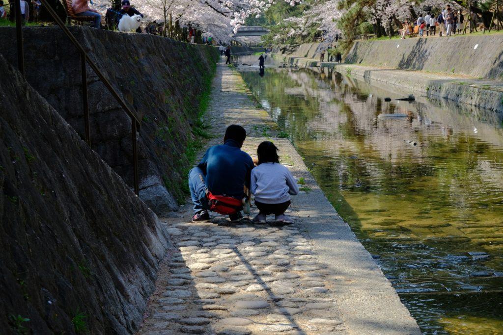 さくら夙川 2020年