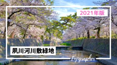 【2021年】兵庫の桜の名所『夙川河川敷緑地』