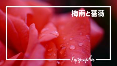 梅雨と薔薇|須磨離宮公園