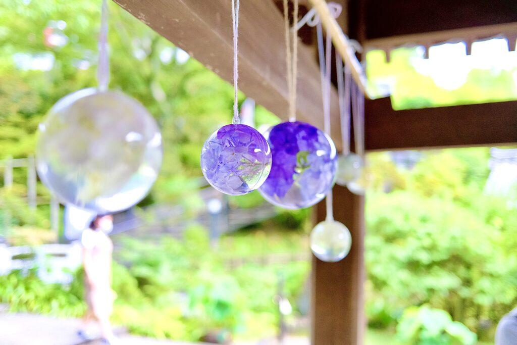 岡寺 紫陽花 天竺牡丹