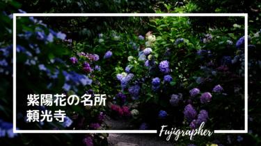 【写真スポット】境内一面の紫陽花。今が見頃の『頼光寺』|兵庫