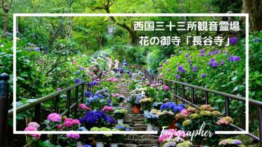 【写真スポット】有名な紫陽花ロードを撮りに『長谷寺』へ!|奈良